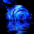 blue-rose-doug-long_edited